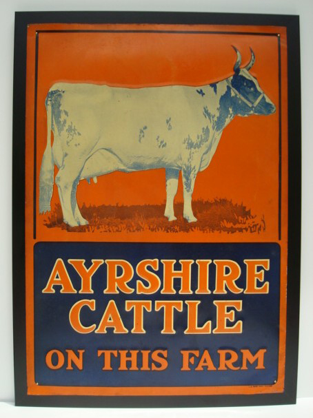 syrshire cattle sign, American Art Antiques